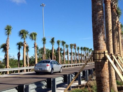 Highway Sabal Planting