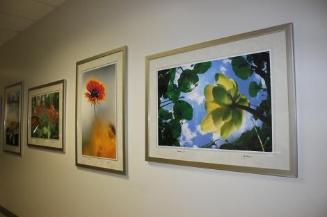 Wildflower Photography Exhibit